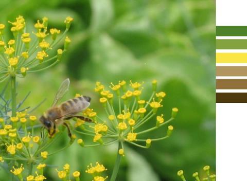 Méhecskés fotó színek inspirációjaként - színek a fotóról